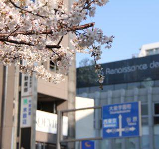 大泉学園の桜
